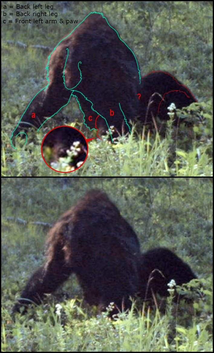 New Footage: A Trapper In Alberta Canada Took This Amazing Photo Of Bigfoot Bears10