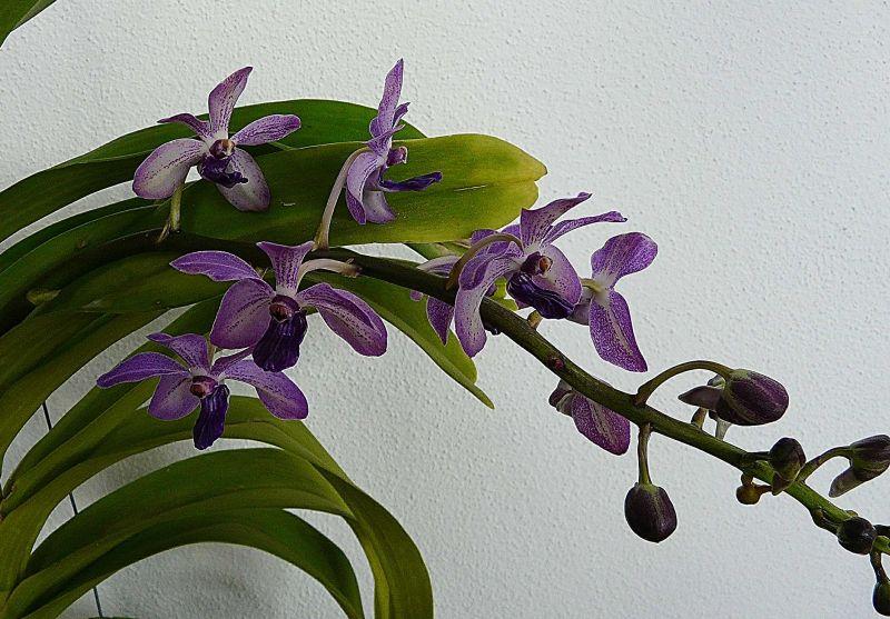 Orchideen-Neuzugang 2 - Seite 29 2019_321