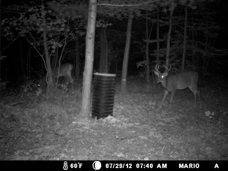 photo de mon site d'appatage Deer_214