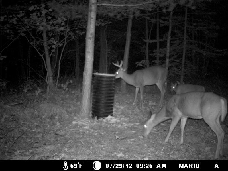 photo de mon site d'appatage Deer_215