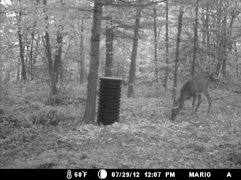 photo de mon site d'appatage Deer_217