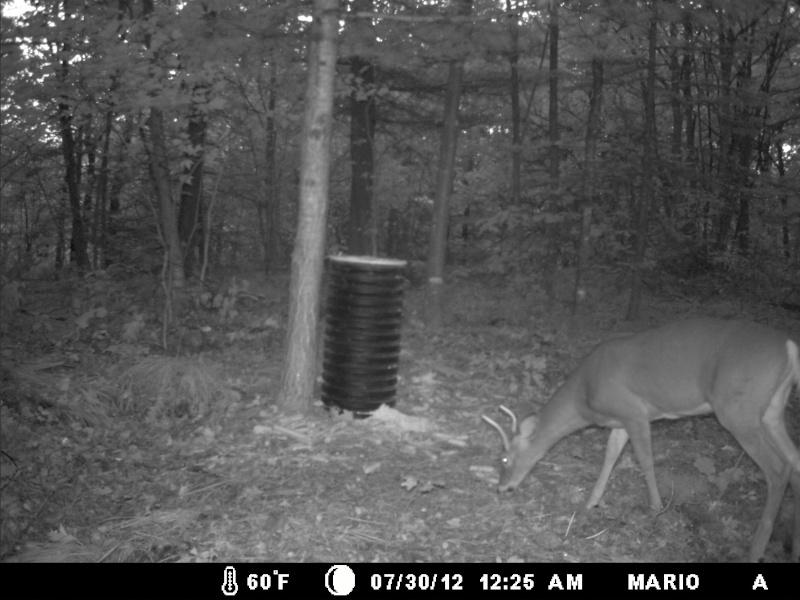 photo de mon site d'appatage Deer_218