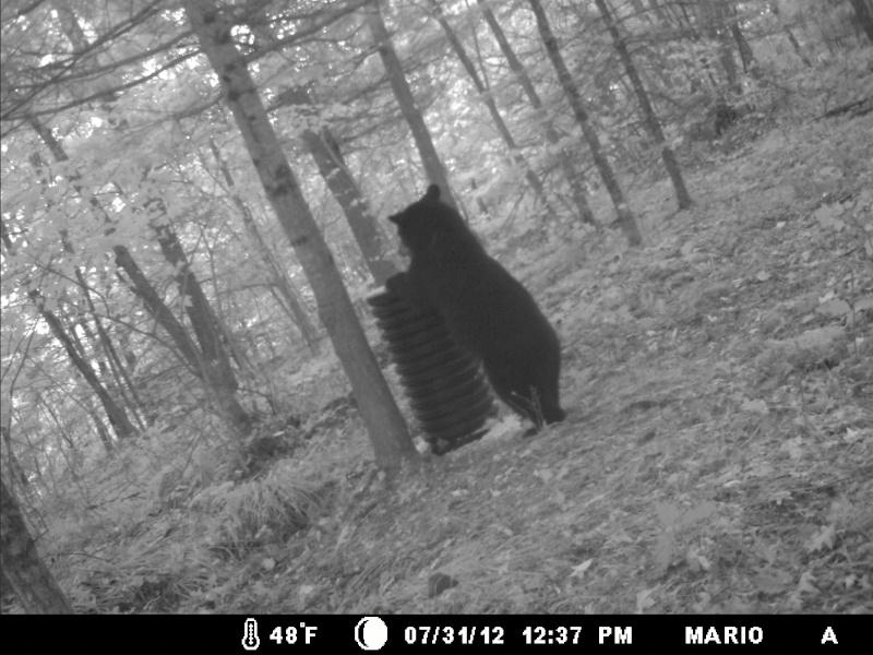 photo de mon site d'appatage Deer_219