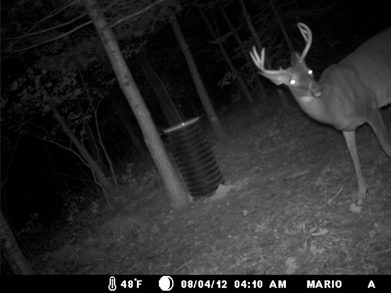 photo de mon site d'appatage Deer_220
