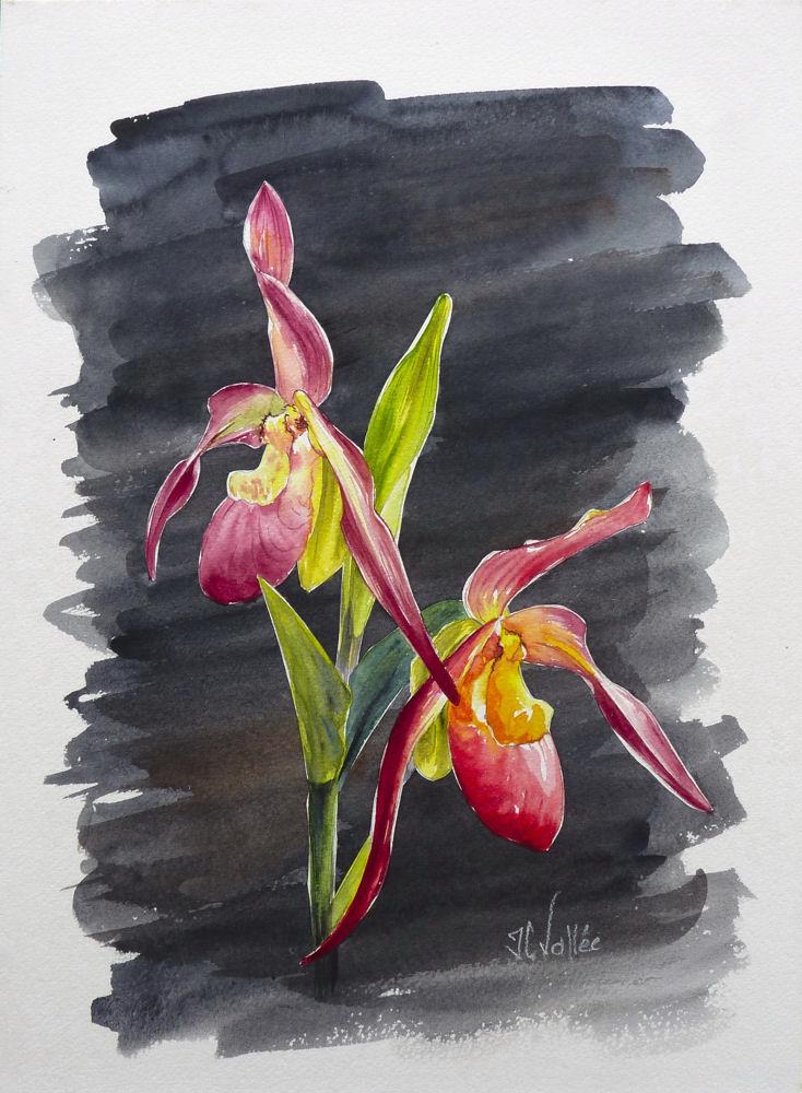 Perso c'est l'aquarelle. - Page 2 Orchid11