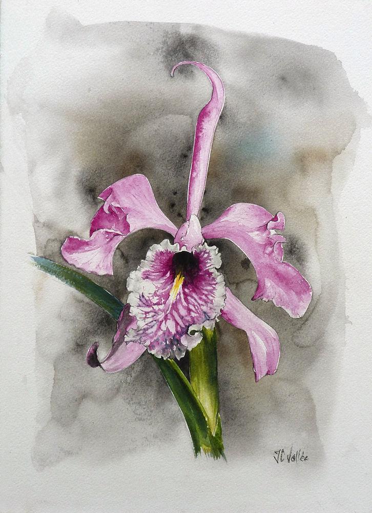 Perso c'est l'aquarelle. - Page 2 Orchid12