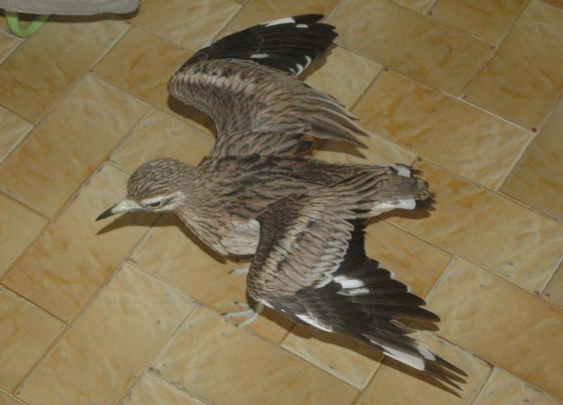 Connaissez-vous cet oiseau??? Dsc_9711