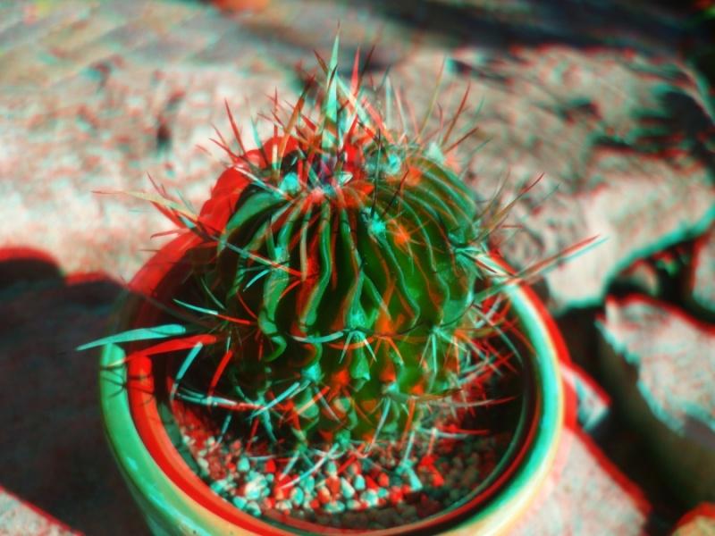 3D-Fotografie P1040113