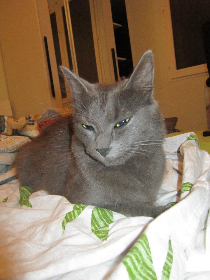 Une amie a perdu sa chatounette  48658610