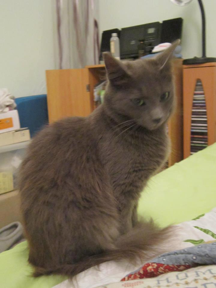 Une amie a perdu sa chatounette  57857110