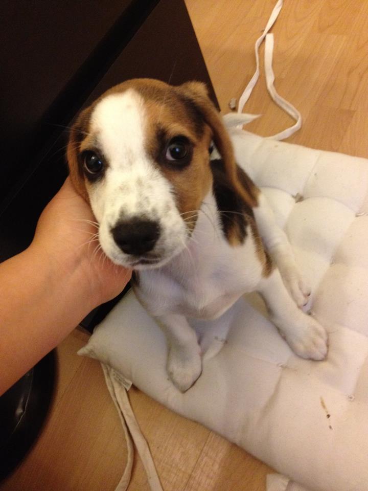 Urgent! Natasha, petite chienne à Paris 21787511