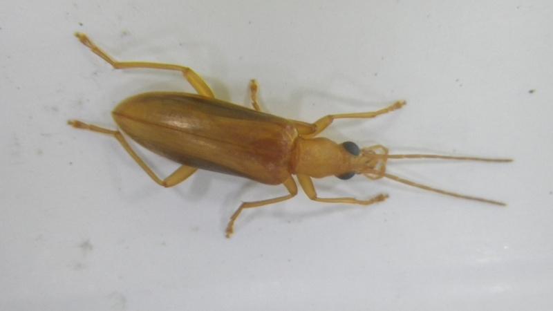 Un insecte qui nous embête à Bora Bora Imgp1711