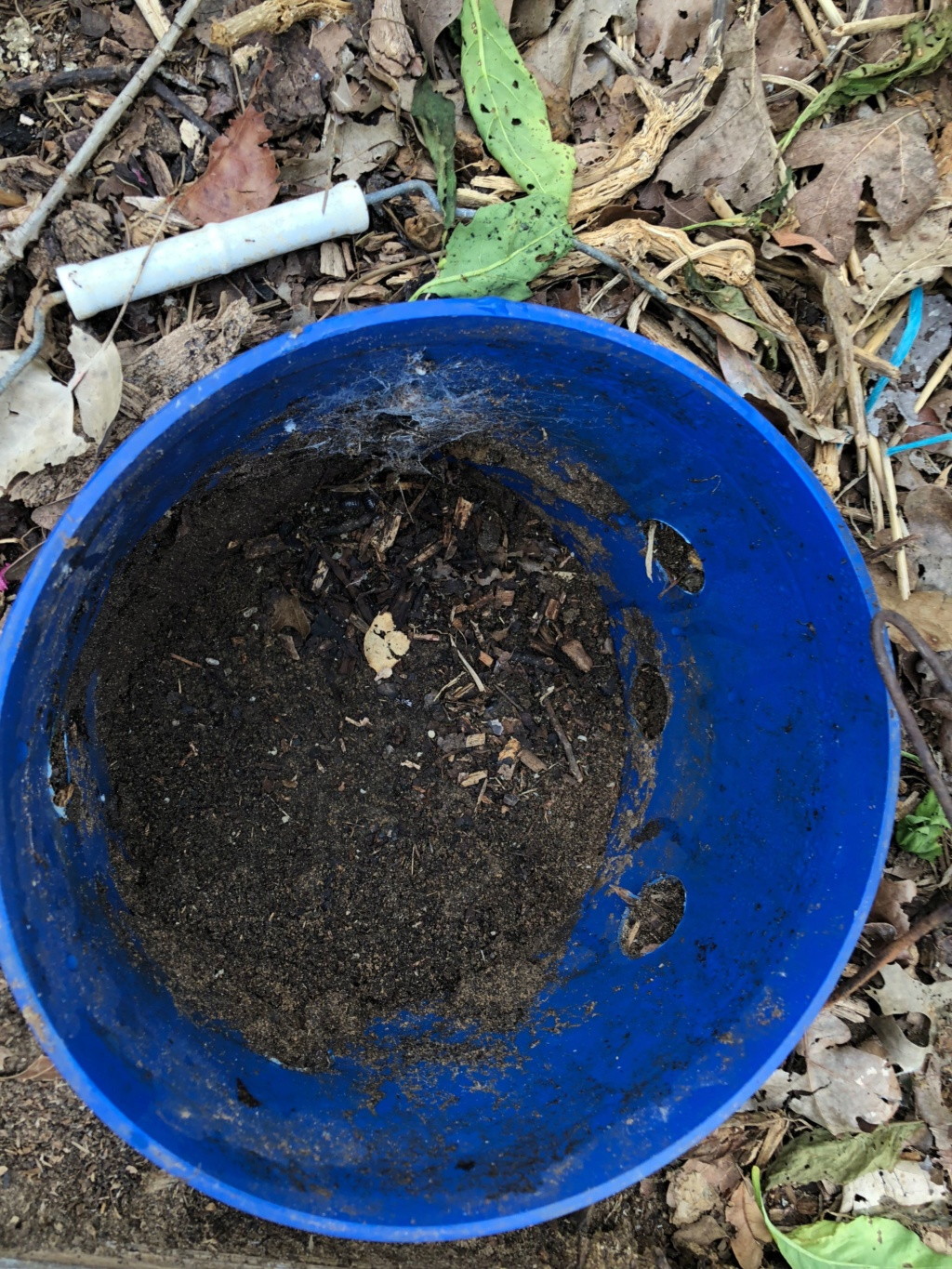 The SFG Journey:Vermicompost Garden Bucket(VGB): How fast do worms eat in a VGB experiment  - Page 2 Img_0034