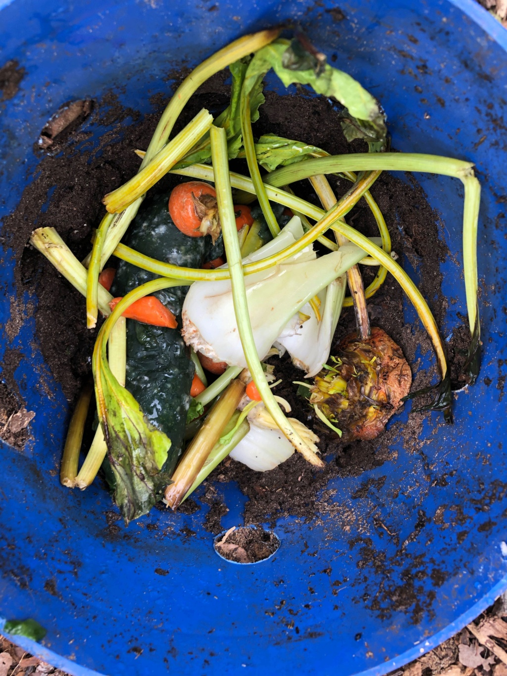 The SFG Journey:Vermicompost Garden Bucket(VGB): How fast do worms eat in a VGB experiment  - Page 2 Img_0035