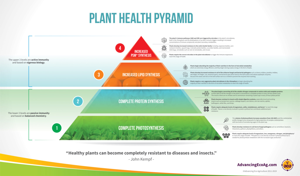 SFG Journey: Plant Health Pyramid Plant_10