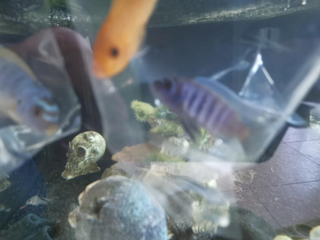 identification poissons  Img_2013