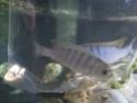 identification poissons  Img_2011