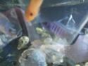 identification poissons  Img_2012