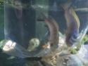 identification poissons  Img_2014