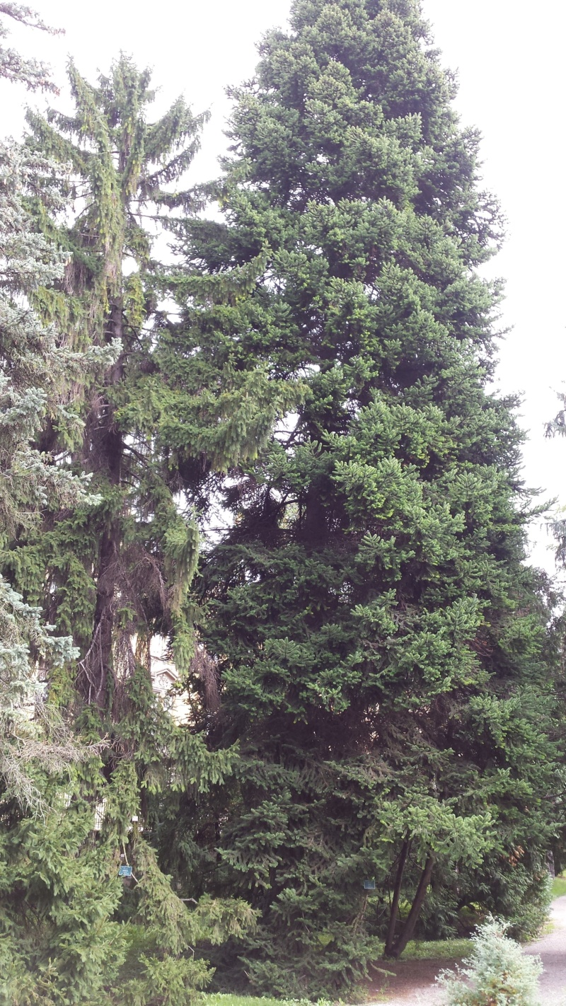 Crnogorične šume 20191010