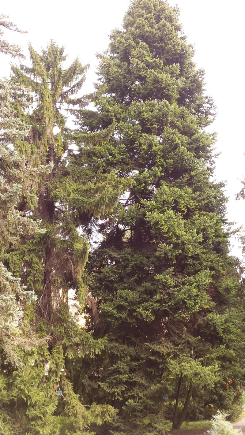 Crnogorične šume 20191011