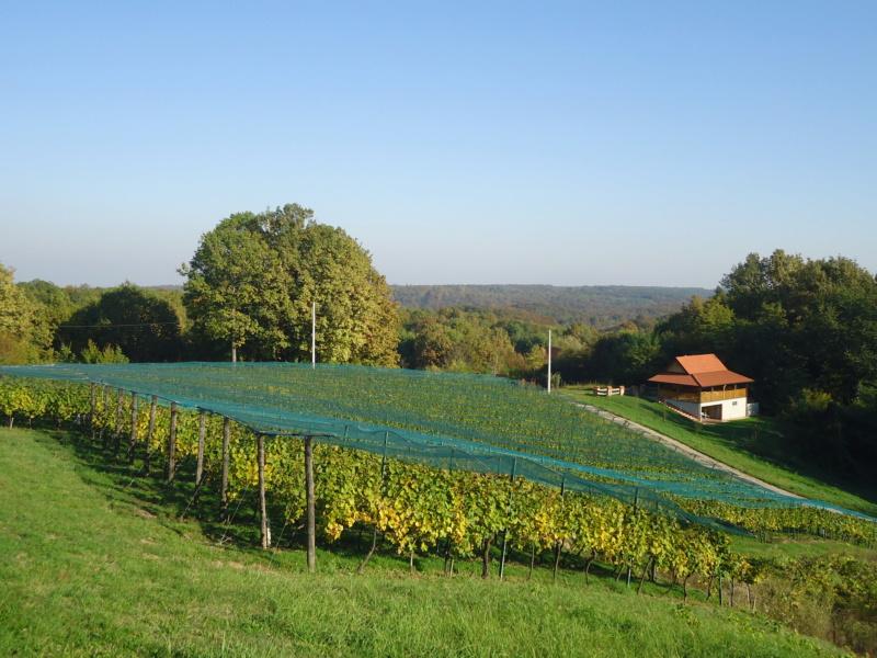 Fotografije vinograda Dsc08510