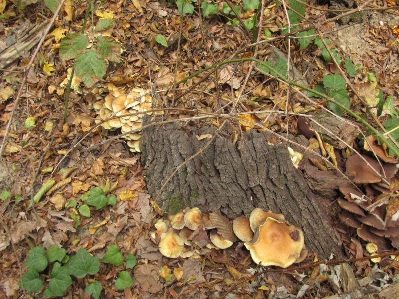Gljive općenito Img_1513