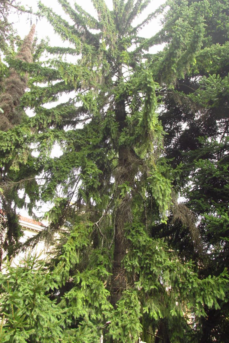 Crnogorične šume Img_3211