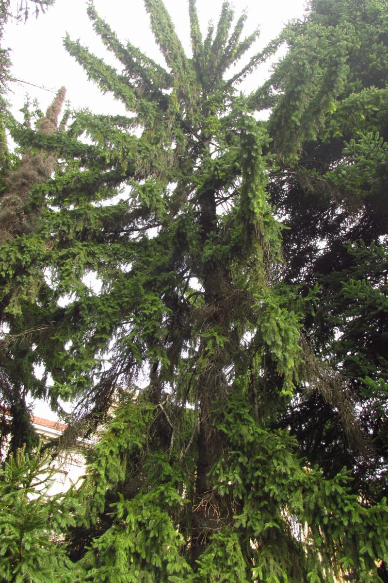 Crnogorične šume Img_3212