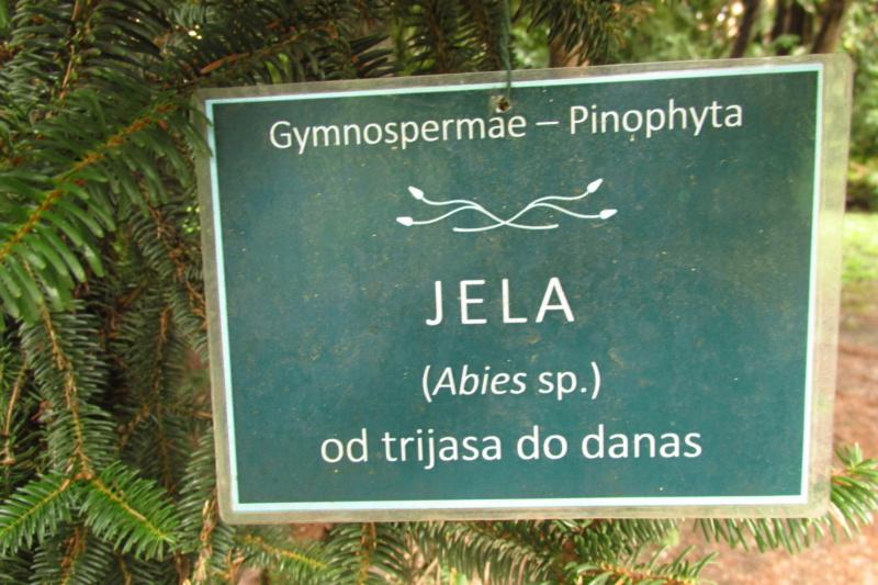 Crnogorične šume Img_3213