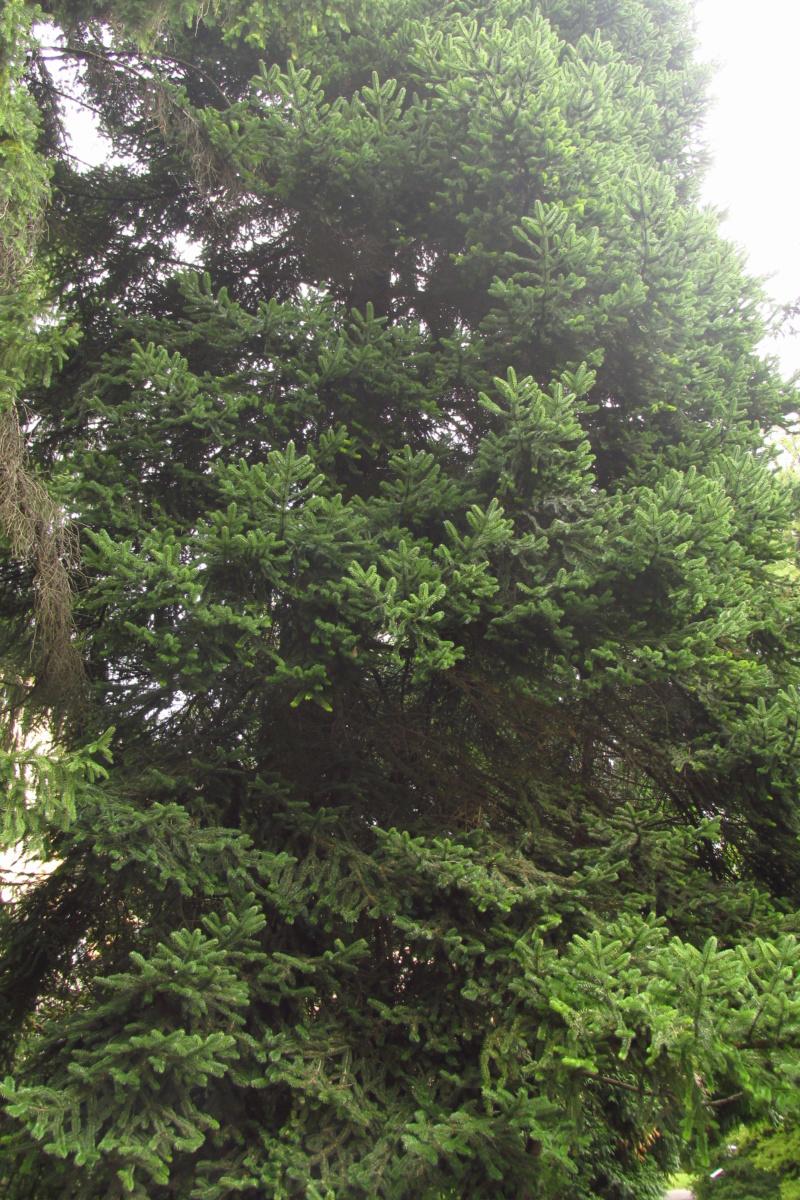 Crnogorične šume Img_3214