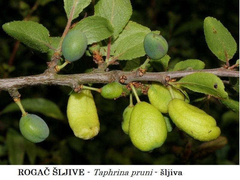 Zaštita voćnjaka od bolesti i štetočina Pocket10