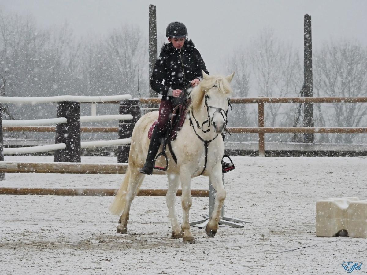 Cheval Blanc sous la neige + portrait P1090910