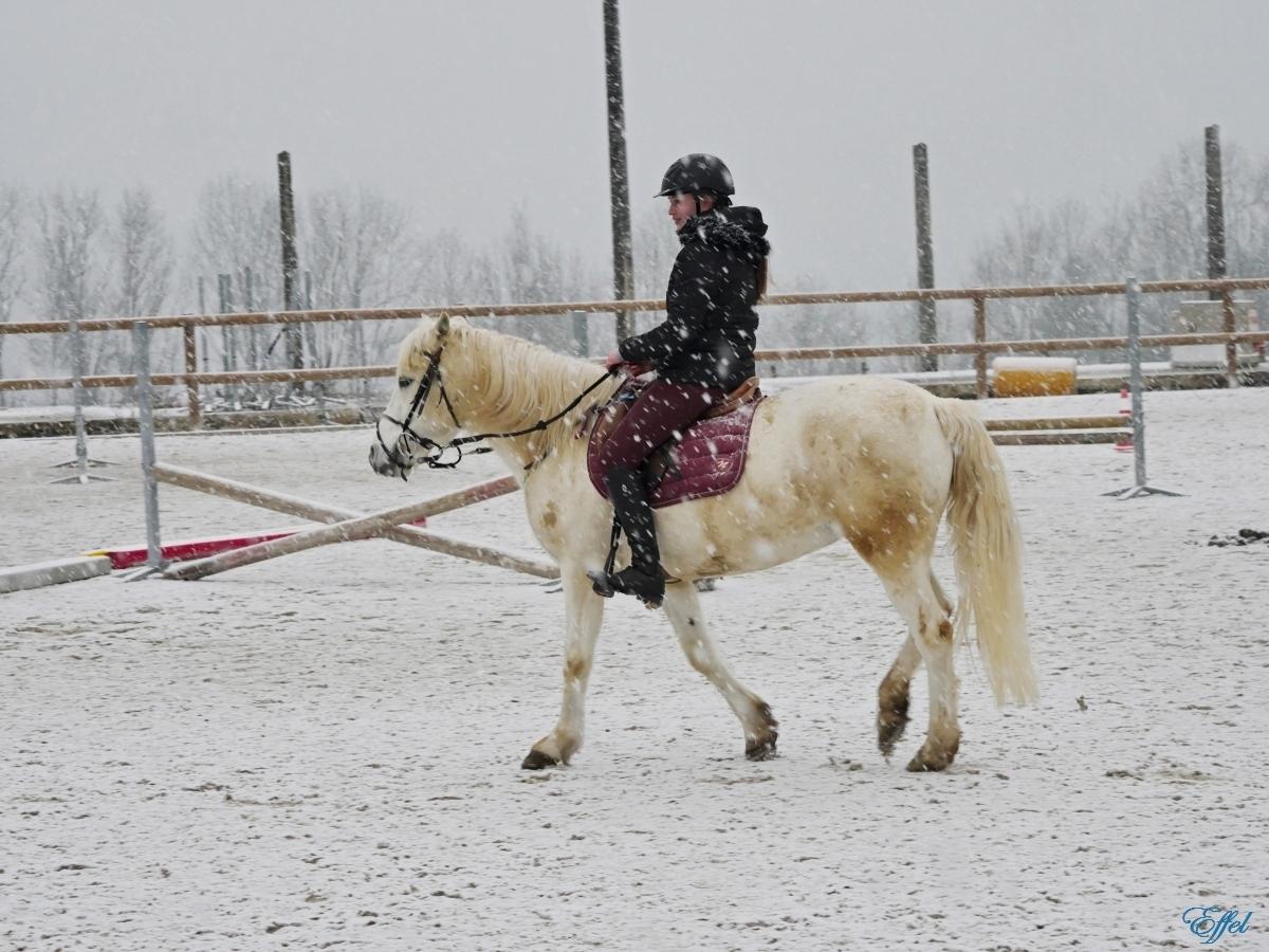 Cheval Blanc sous la neige + portrait P1090911