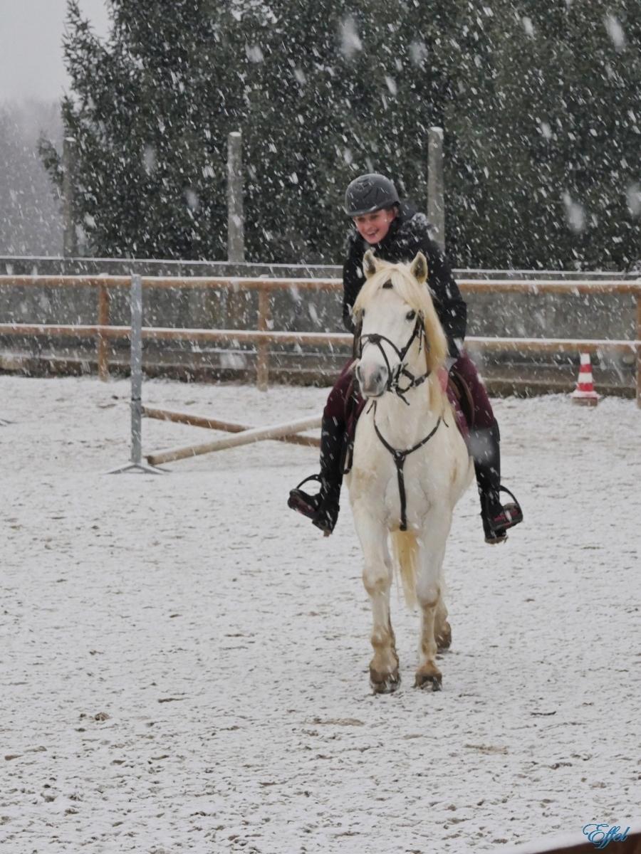 Cheval Blanc sous la neige + portrait P1090912