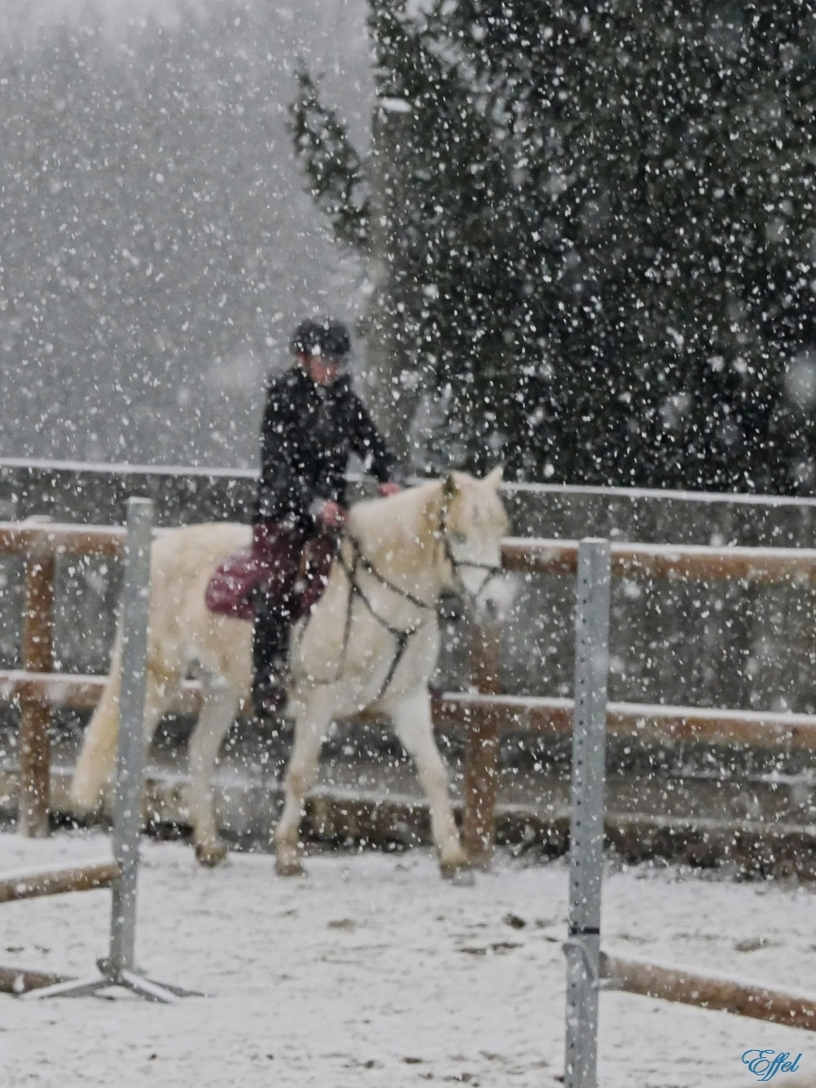 Cheval Blanc sous la neige + portrait P1090913