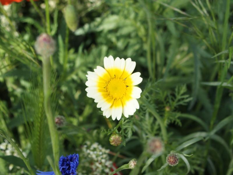 Qui connait cette fleur ? P5054711