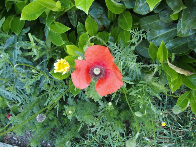 Qui connait cette fleur ? P5074710