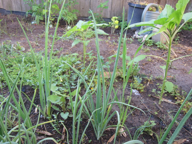 Leo's first garden - Page 6 Img_6619