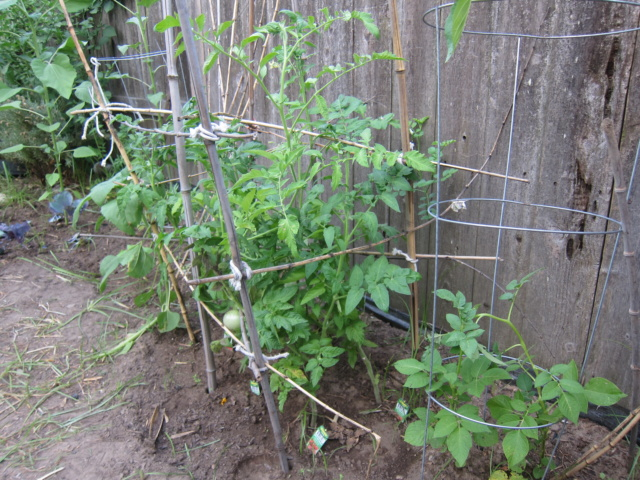 Leo's first garden - Page 6 Img_7314