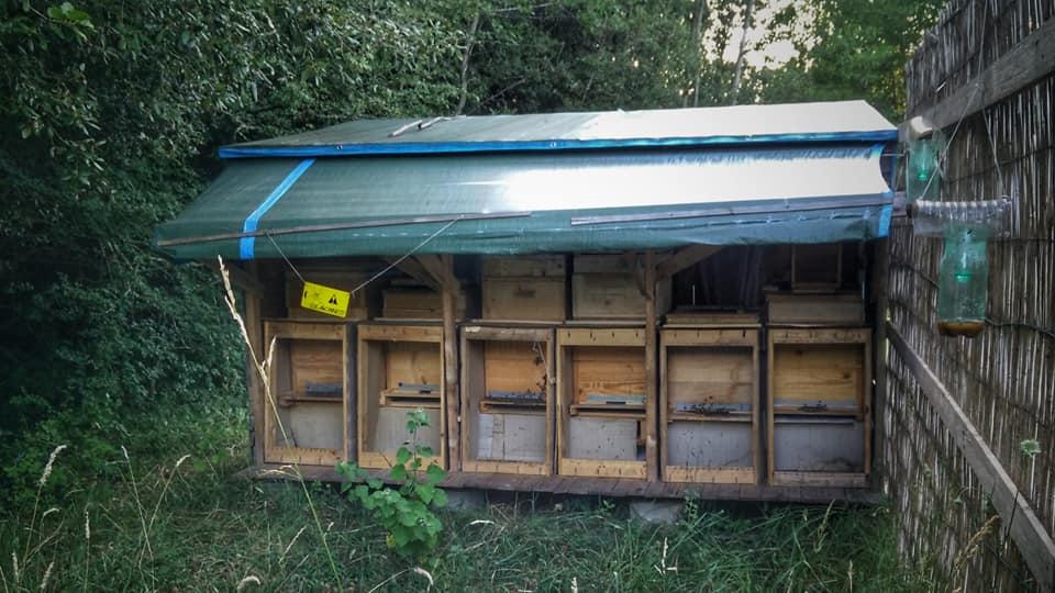 La ruche de campeur Zaza410