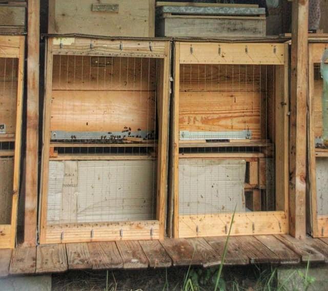 La ruche de campeur Zaza810
