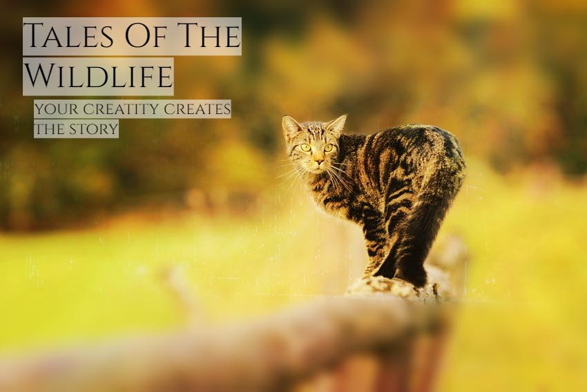 Tales of the Wildlife Cat-ca10