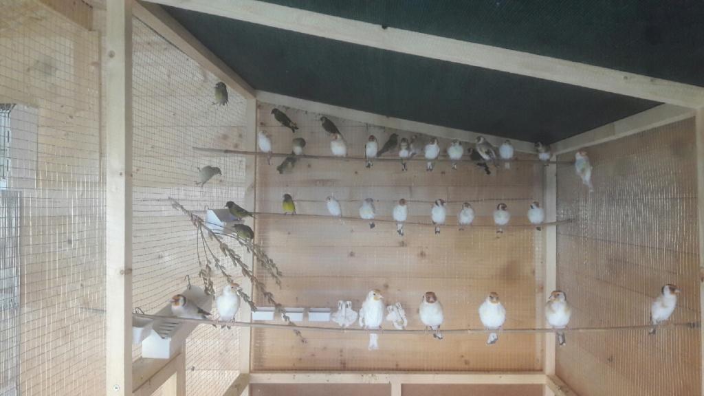 Mes oiseaux  Compre11