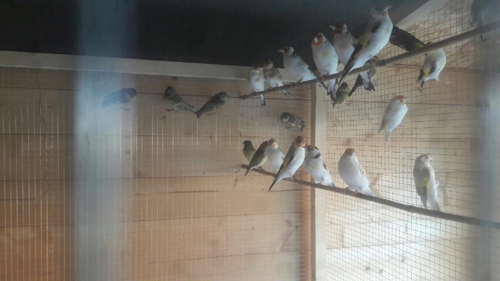 Mes oiseaux  Compre12