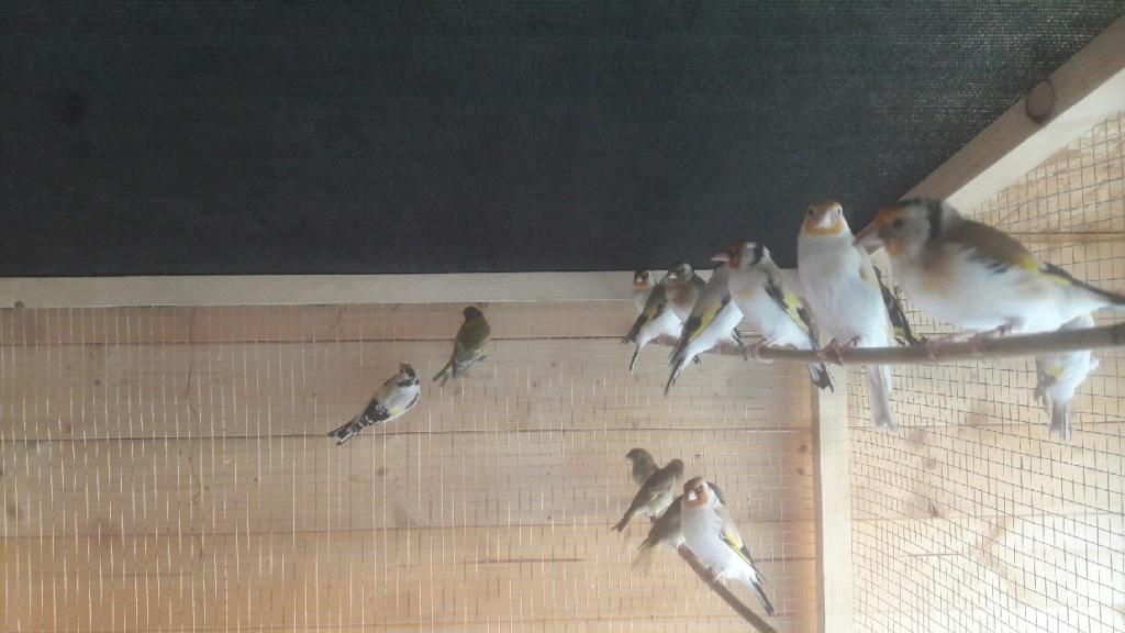 Mes oiseaux  Compre14