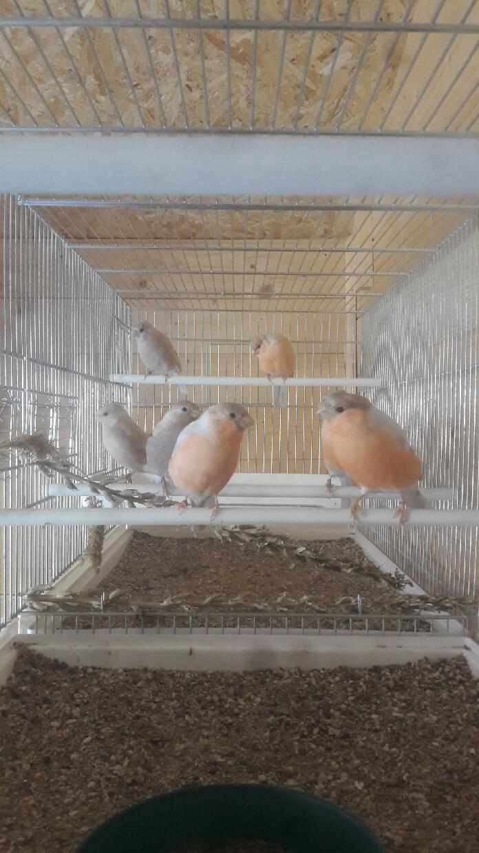 Mes oiseaux  Compre15