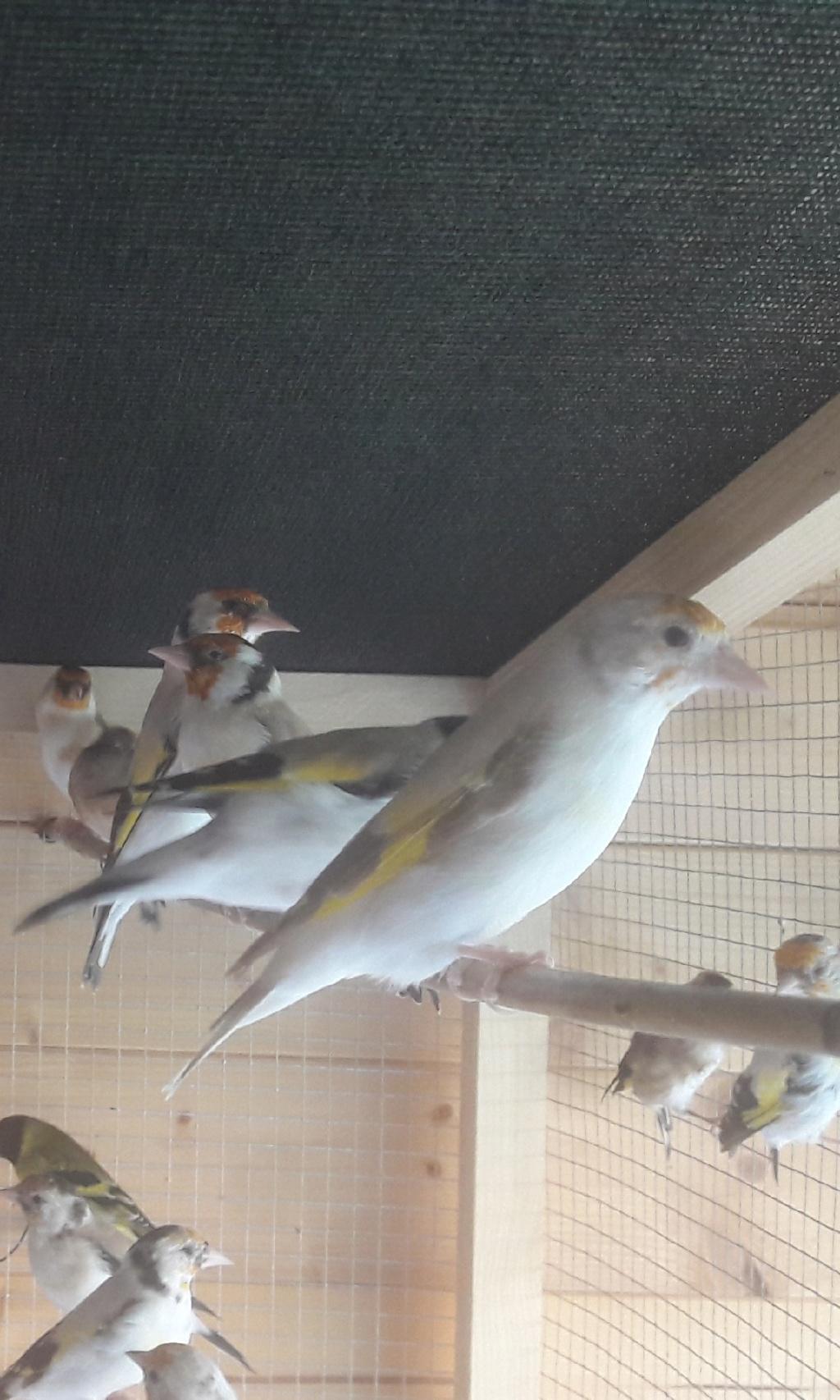 Mes oiseaux  Compre17