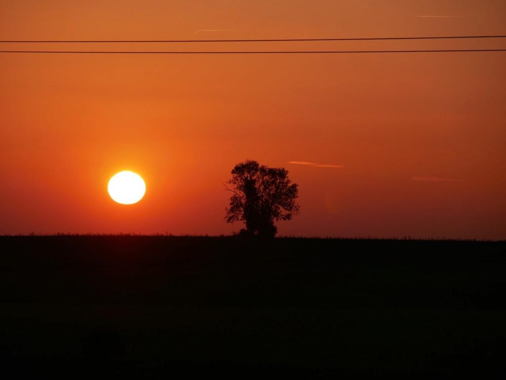 Un arbre et le soleil Sunset10
