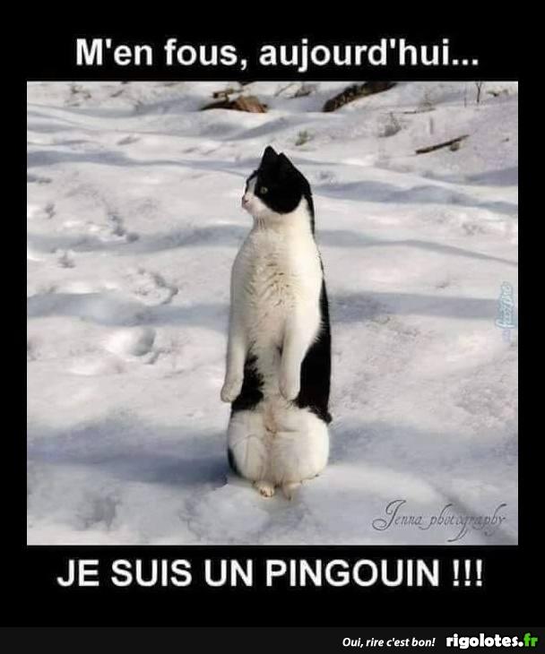 VOTRE DESSIN HUMORISTIQUE - Page 15 Pingou10